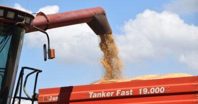 Ladrões furtam soja em propriedade rural da região