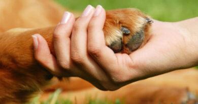 PM registra envenenamento de cães em Borrazópolis