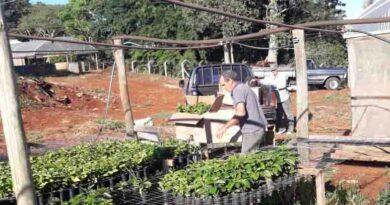 Programa entrega 40 mil mudas de café em Jardim Alegre