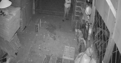 Galos de rinha avaliados em mais R$ 40 mil são furtados