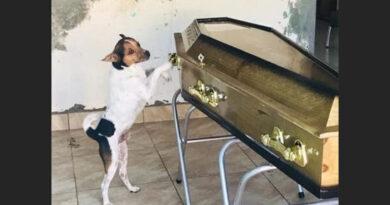 Cachorro chora morte da dona em velório na Bahia