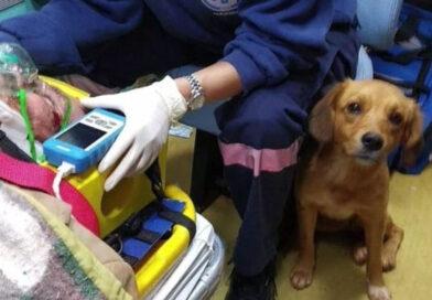 Cachorrinha entra em ambulância e aguarda tutor no hospital