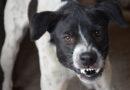 Cachorro encontra carteira furtada em São João do Ivaí