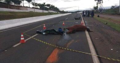 Motociclista morre após atropelar cavalo na PR-445