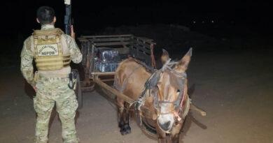 Policiais apreendem carroça puxada por burro com 300 quilos de maconha